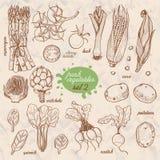 Set odosobneni warzywa w nakreślenie stylu Asparagus, czereśniowi pomidory, kukurudza, grule, rzodkiew, karczoch, szpinak, leek ilustracja wektor