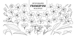 Set odosobniony frangipani w 35 stylach royalty ilustracja