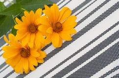 Free Set Of 3 Orange Osteospermum Daisy Or Cape Daisy Flowers On Decorative Tablecloth, Napkin Striped Background. Close-up Royalty Free Stock Photos - 184263798