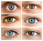 Set Of 6 Real Different Open Eyes / Huge Size Stock Image