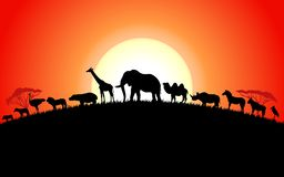 Free Set Of African Animals Silhouette On Sunset Stock Photography - 153162922