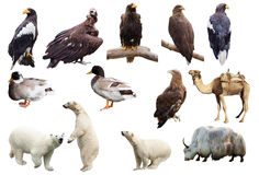 Set Of Animals. Isolated Over White Royalty Free Stock Images