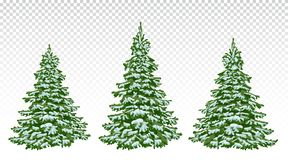 Set Of Beautiful Christmas Trees In The Snow. Christmas. Winter Royalty Free Stock Photography