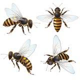 Set Of Bee Royalty Free Stock Photos