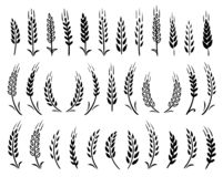 Free Set Of Black Hand Drawn Wheat Ears Icons Royalty Free Stock Photos - 142283718