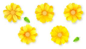Set Of Buds Of Flower And Green Leafs. Daisy, Gerbera, Chrysanthemum Flowers Isolated On White, Vector 3D Illustration Royalty Free Stock Photo