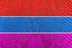 Free Set Of Colourful Python Snake Skin Texture Background. Stock Photography - 76242352