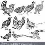 Set Of Detailed Hand Drawn Game Birds Royalty Free Stock Photo