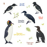 Set Of Different Birds, King Penguin, Common Loon And Murre, Razorbill, Little Auk Royalty Free Stock Photos