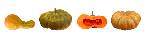 Free Set Of Different Kinds Of Pumpkins. Isolated. Royalty Free Stock Photography - 59824727