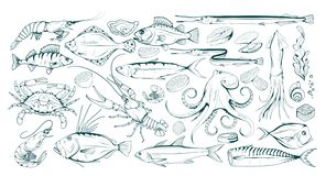 Free Set Of Different Sea Fish And Mollusks. Seafood With Spice. Fresh Sea Fish With Ingredients. Vector Seafood. Fresh Fish Set. Royalty Free Stock Photos - 144561098