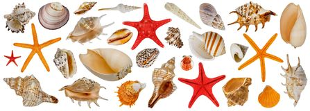 Free Set Of Different Sea Shells. Starfish Collection. Isolated On A White Background Stock Images - 163419154