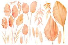 Free Set Of Drawings Of Dry Plants, Tropical Leaves, On A White Background, Watercolor Illustration, Beige Herbs Stock Photography - 188301782