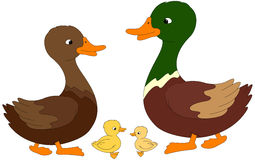 Set Of Duck, Duckling And Drake. Vector Illustration Royalty Free Stock Photos