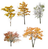 Set Of Five Autumn Trees Isolated On White Stock Photos