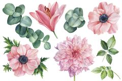 Free Set Of Flowers Of Pink Anemones, Lily, Dahlia And Eucalyptus Leaves On An Isolated White Background, Watercolor Clipart Stock Image - 191502321