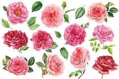 Free Set Of Flowers Pink And Red Roses, Green Leaves On Isolated White Background, Watercolor Illustration Greeting Cards Royalty Free Stock Photo - 192688585