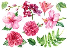 Free Set Of Flowers Roses, Lily, Hibiscus, Orchid, Green Leaves On An Isolated White Background, Watercolor Clipart Royalty Free Stock Photo - 192688365