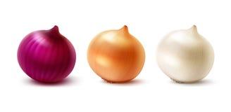Set Of Fresh Whole Yellow Red White Onion Bulbs Stock Photo