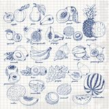 Set Of Fruits On Paper. Vector Hand Drawing Sketch Illustration Stock Photos