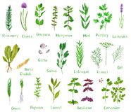 Free Set Of Green Herbs Stock Photography - 144862552