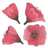 Set Of Hand Drawn Flowers Royalty Free Stock Photos