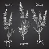 Set Of Hand Drawn Sketch Of Lavender Flower And Cute Bows Isolated On Chalkboard Background. France Provence Retro Pattern For Royalty Free Stock Photo