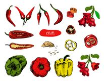Free Set Of Hand Drawn Sketch Peppers.Chilli Red Pepper Vector Illustration.Vintage Ink Hand Drawn Pepper, Isolated On White Royalty Free Stock Photos - 143039848