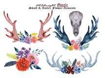 Set Of Hand Painted Watercolor Flowers, Leaves, Antlers And Horns  In Rustic Style. Bohemian Composition Perfect For Floral Design Stock Image