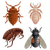 Set Of Icons With Pests Royalty Free Stock Image