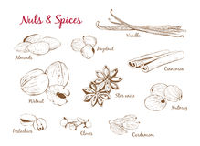 Set Of Illustrations With Spices And Nuts Stock Photo