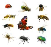 Set Of Insects Royalty Free Stock Images