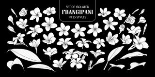 Free Set Of Isolated White Silhouette Frangipani. Royalty Free Stock Images - 119686339