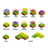 Set Of Isometric Tiles Flowers