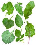 Set Of Leaf Vegetables Royalty Free Stock Photos
