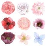 Set Of Many Flowers Royalty Free Stock Photos