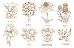 Free Set Of Medical Herbs. Stock Photos - 77264473