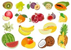 Set Of Multicolored Ripe Exotic And Tropical Fruits. Vector Illustration. Stock Photography