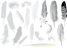 Set Of Nineteen Grey Feathers Royalty Free Stock Photography