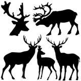 Set Of Of Deer Stock Image