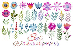 Set Of Ornamental Plants, Flowers, Leaves, Fruits And Berries Made In Watercolors Royalty Free Stock Photography