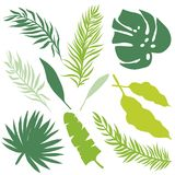 Set Of Palm Leaves Silhouettes Stock Images