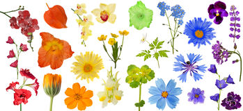 Set Of Rainbow Color Flowers Isolated On White Stock Images