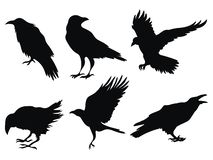 Free Set Of Ravens. A Collection Of Black Crows. Silhouette Of A Flying Crow. Vector Illustration Of Ravens Silhouette Stock Photo - 159352670