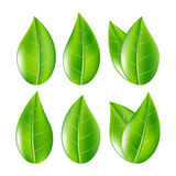 Set Of Realistic Green Leaves Collection. Vector Illustration Royalty Free Stock Photos