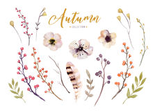 Free Set Of Red And Yellow Autumn Watercolor Leaves And Berries, Flowers Hand Drawn Design Foliage Elements Decoration. Stock Images - 97761094