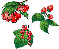 Set Of Red Berries Royalty Free Stock Photography