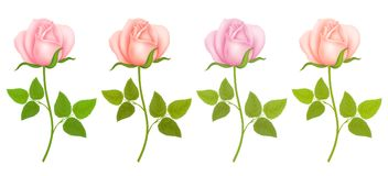 Free Set Of Roses Flowers. Vector Illustration Royalty Free Stock Photo - 118137585