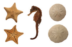 Set Of Sea Animals Stock Photo