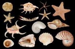 Free Set Of Sea Cockleshells Stock Photos - 21849063